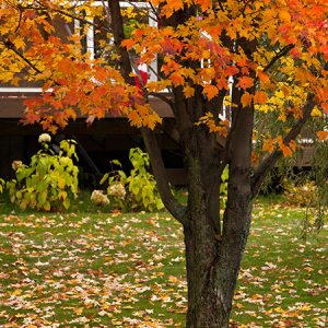 Winterize a lawn by removing leaves
