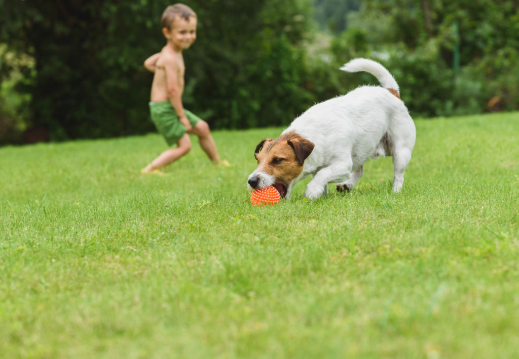 Boy and Dog in Green Grass