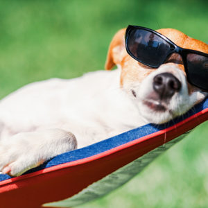 Dog on Hammock resting turf and tree tips