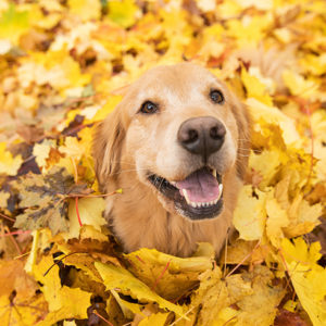 5 to dos for fall lawn care